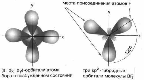 фрагменты молекул имеют